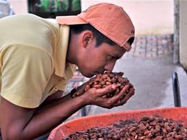 Bauer testet fermentierten Kakao [klein]