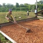 Bauer beim Trocknen von Kakao